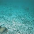 Indian Ocean 3