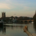 Hen lay on Thames