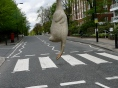 Why did the Chicken cross Abbey Road?